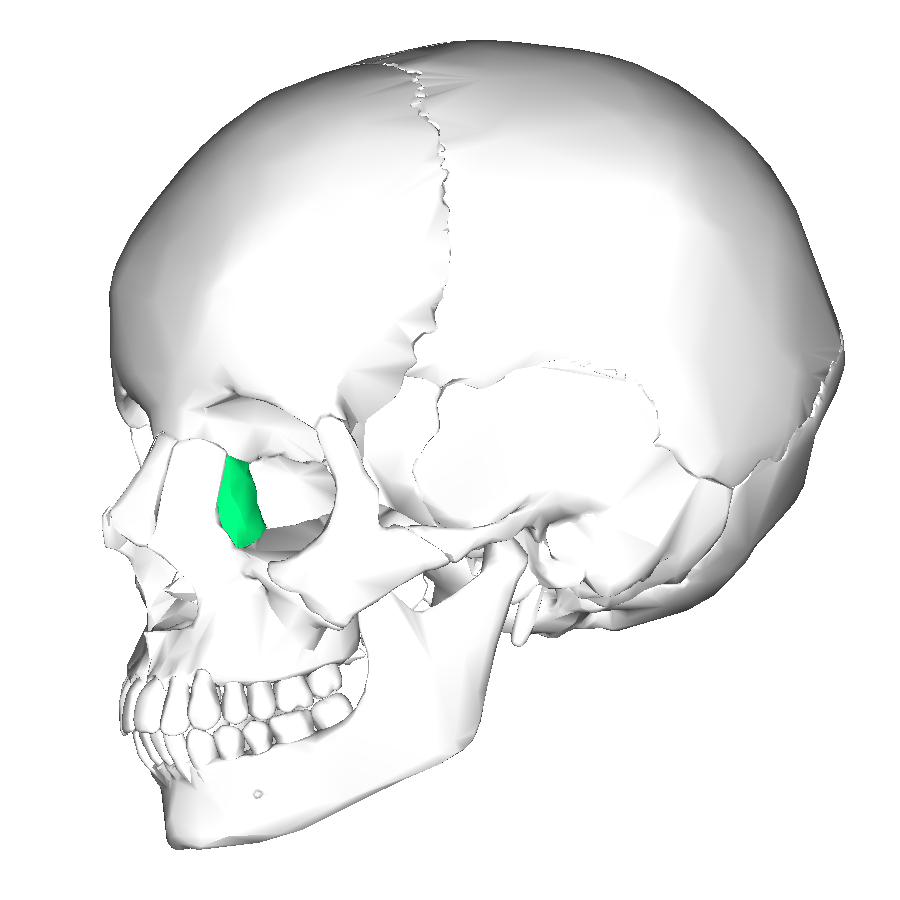 hight resolution of lacrimal bone