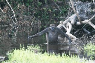 gorille - outil