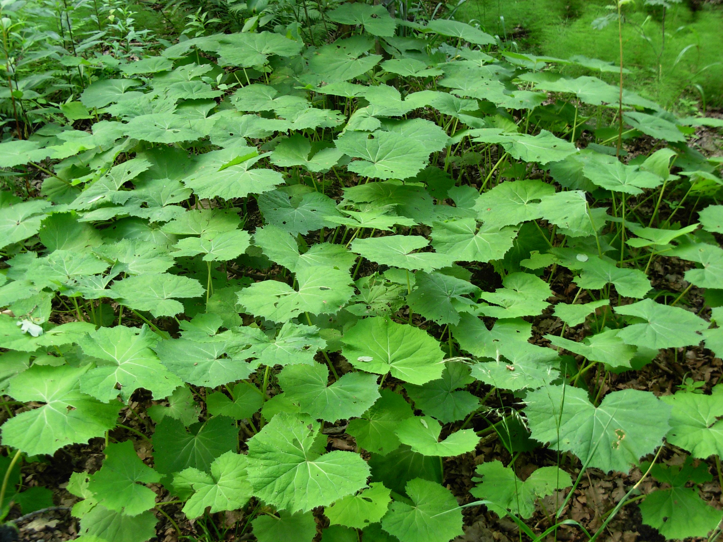 file green big leaves