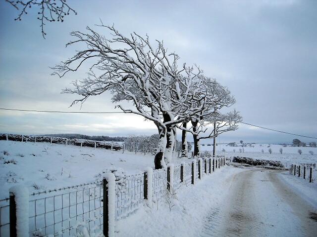 Wind Swept Trees in Winter