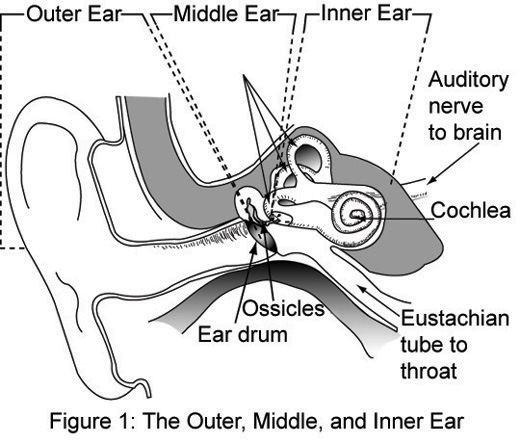 blank ear diagram without labels 1991 ford f150 engine outer middle inner free wiring for you file and jpg wikimedia commons of the with