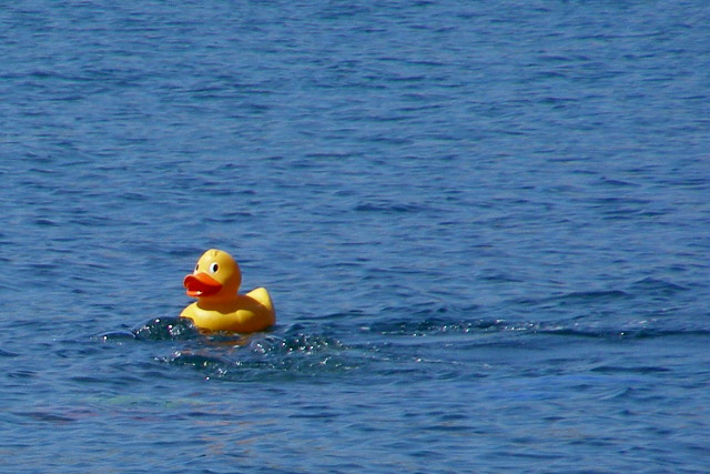 English: Rubber duck, Kimmeridge Bay This larg...