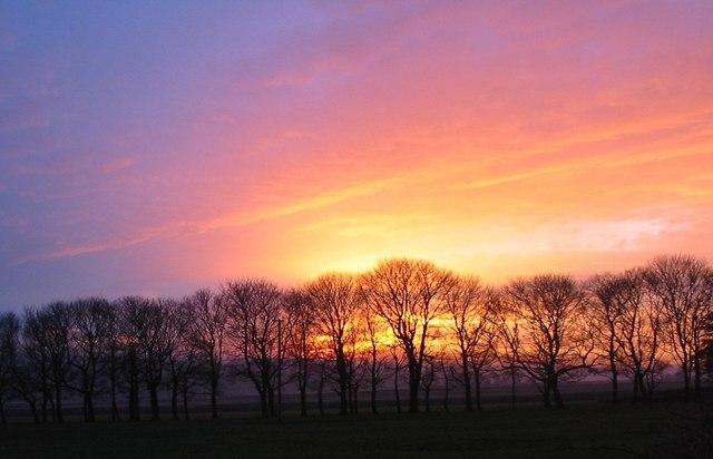 Fall Farm Wallpaper File Avenue Of Trees Against Autumn Sunset Bosley Fields