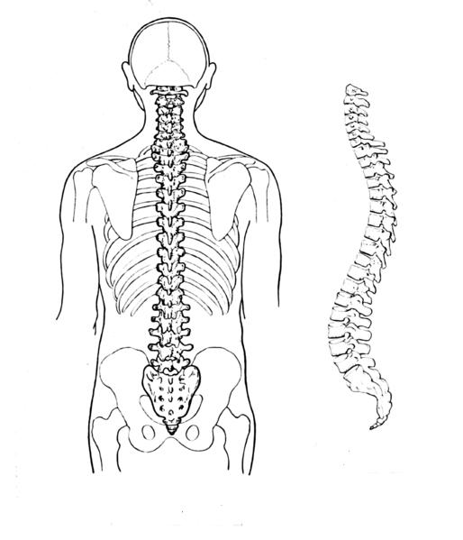 Rückenschmerzen - Ursachen und Prävention