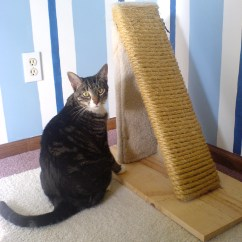 Best Sofa Material For Cat Owners Victorian Reproduction Scratching Post Wikipedia