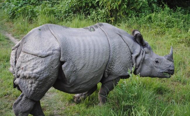 File One Horned Rhino Jpg Wikipedia