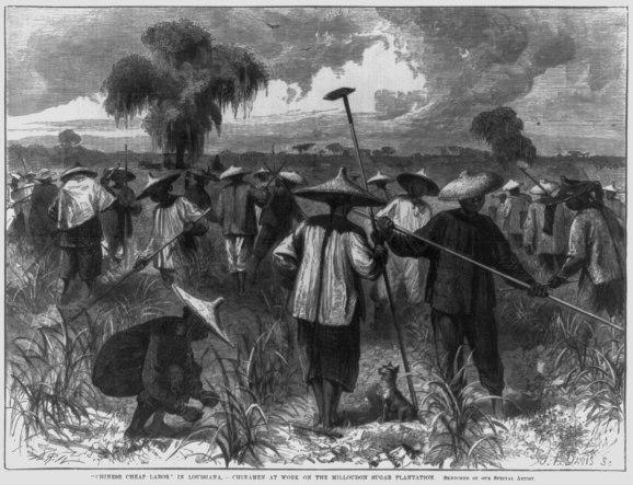 Trabajadores culíes chinos trabajando en una plantación azucarera, s.XIX.