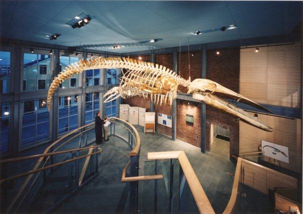 Kobo Whale Wikipedia
