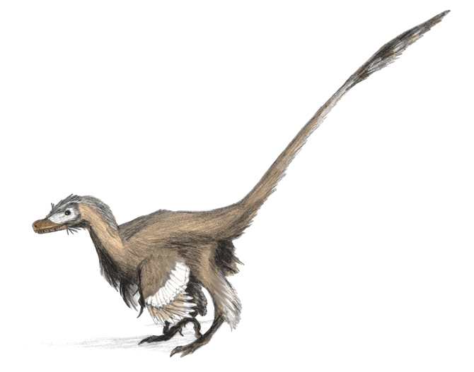 Velociraptor dinoguy2.jpg