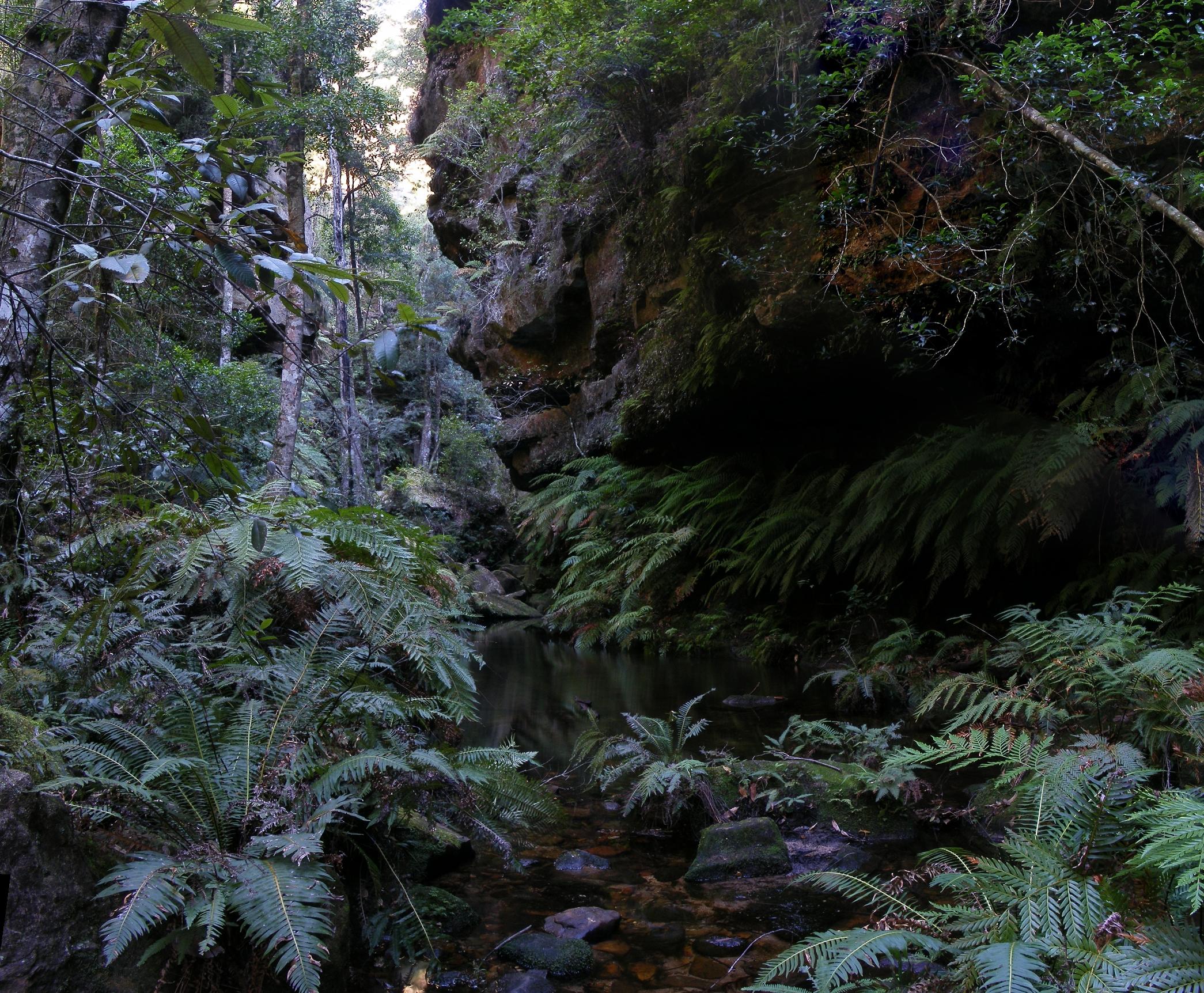 Rainforest Rainforest Images