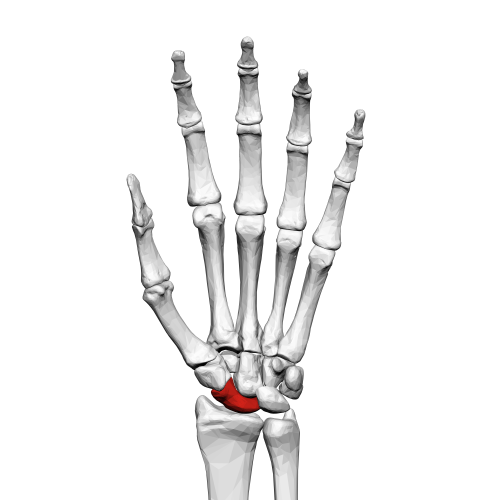small resolution of scaphoid bone