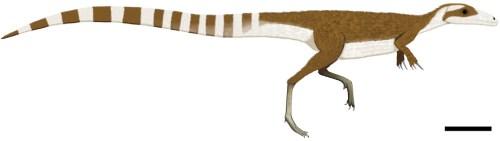 https://i0.wp.com/upload.wikimedia.org/wikipedia/commons/c/ce/Sinosauropteryx_color.jpg?resize=500%2C141&ssl=1