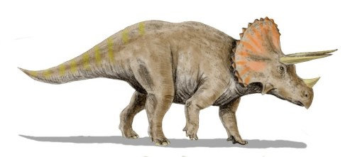 https://i0.wp.com/upload.wikimedia.org/wikipedia/commons/c/ce/Triceratops_BWMK.jpg?resize=500%2C221&ssl=1