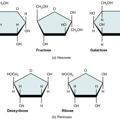 Carbohydrate Structure Diagram Main Panel To Sub Wiring Monosaccharides