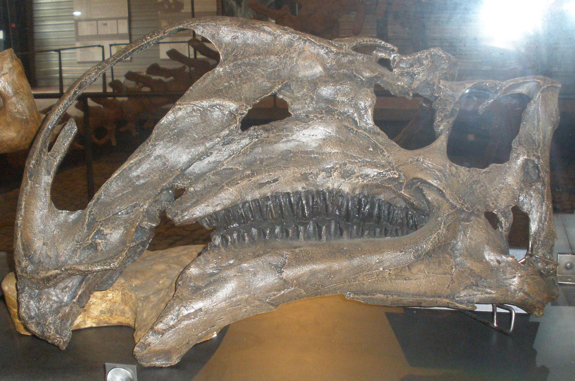 Geol 104 Neornithischia I Thescelosauridae Amp Ornithopoda