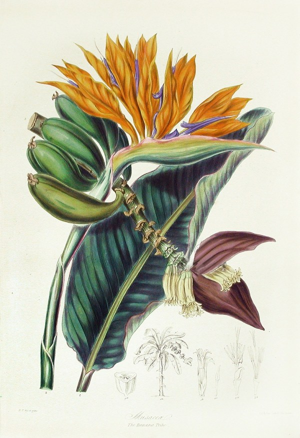 Elizabeth Twining Botanical Prints