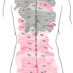 L4 Nerve Pain Diagram Telephone Terminal Block Wiring Medial Cluneal Nerves - Wikipedia