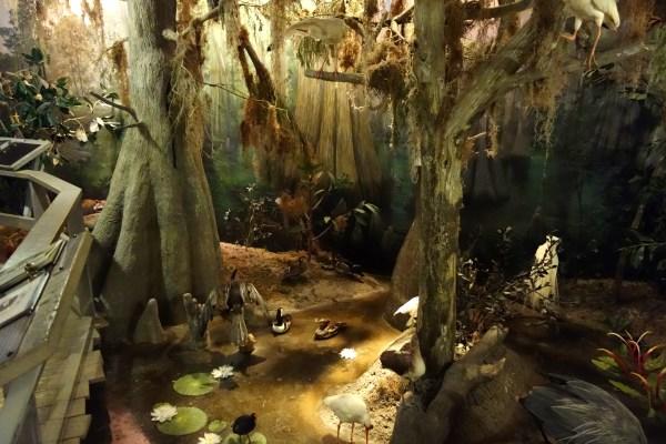 File Swamp - Fernbank Museum Of Natural History Dsc00156
