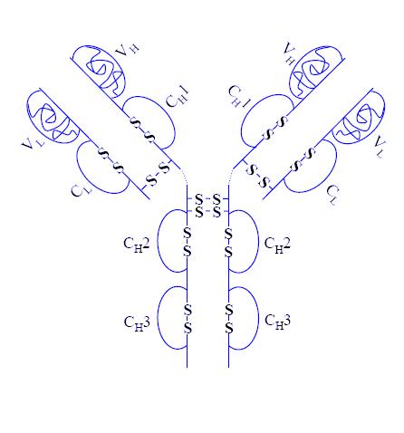 File:Adalimumab structure.png