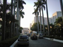 File Palm Trees Lining Entrance Of Imperial Hotel