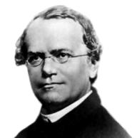 Gregor Mendel (1822-1884)
