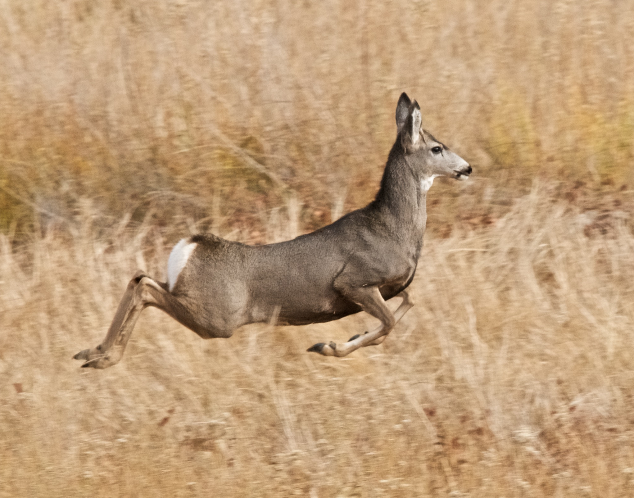 Philadelphia In The Fall Wallpaper 6 Tips For Hunting High Elevation Mule Deer Liveoutdoors