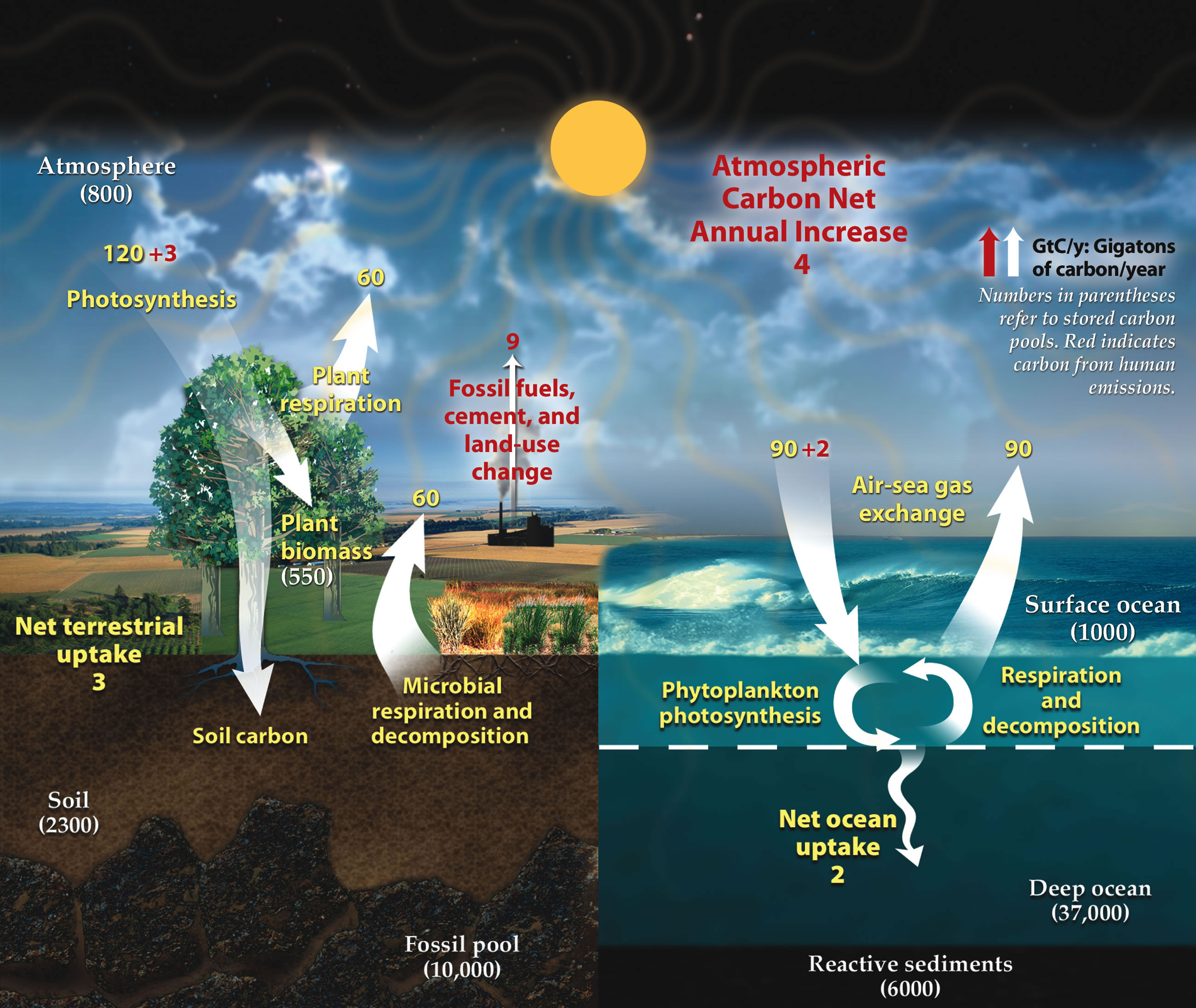 File Carbon Cycle