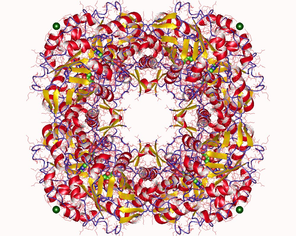 Isopentenyl-diphosphate delta isomerase - Wikipedia