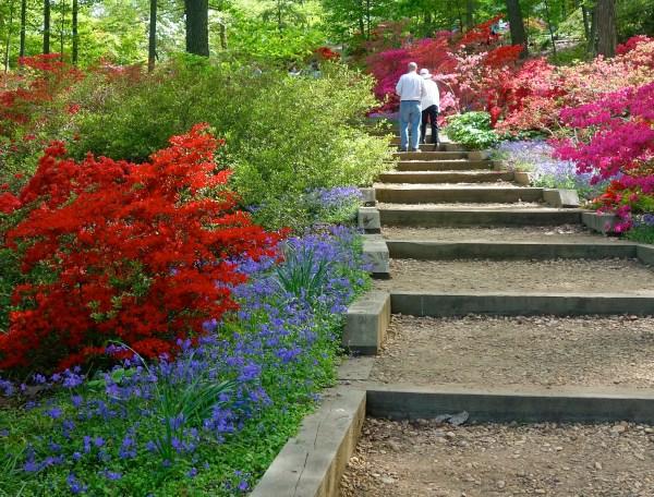 Washington DC Arboretum Gardens