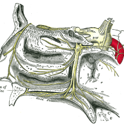 Anterior Teeth Diagram Air Compressor Wiring Greater Palatine Nerve - Wikipedia
