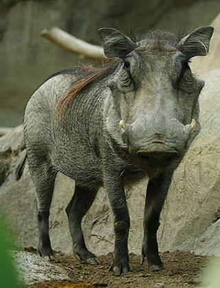 Lightmatter warthog.jpg