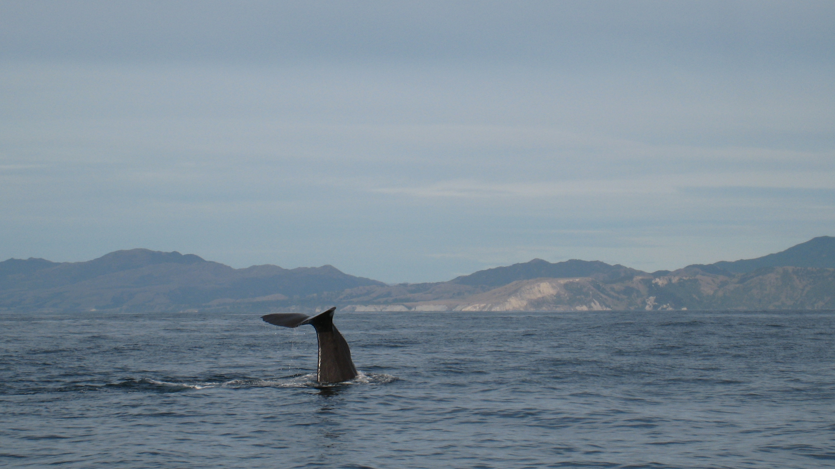 Kaikoura is popular for whale watching and other activities