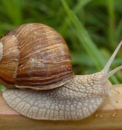 snail habitat diagram [ 3425 x 2283 Pixel ]
