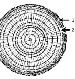 tree stem diagram [ 2040 x 1664 Pixel ]