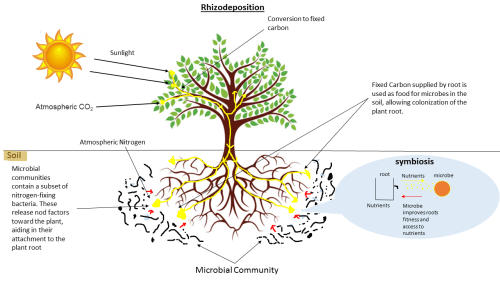 small resolution of root microbiome