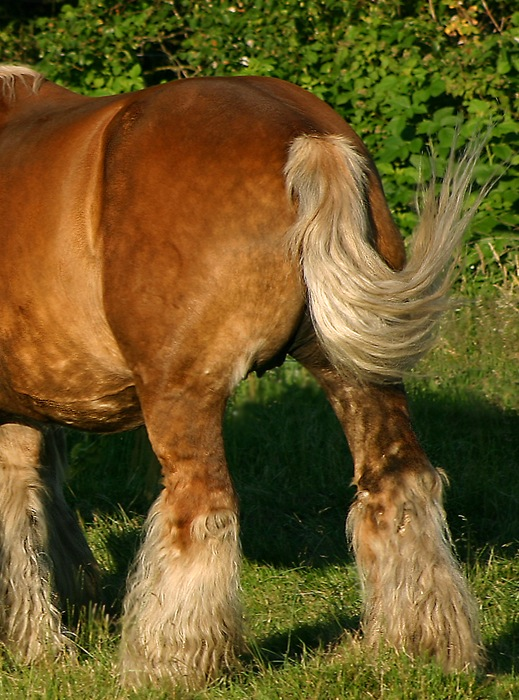 realistic horse breeds # 58