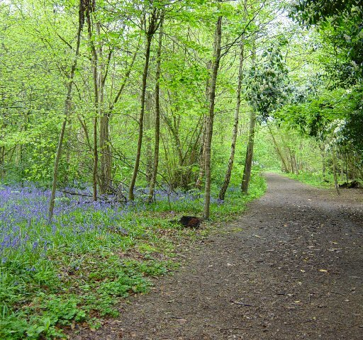 Slindon Wood - geograph.org.uk - 166111