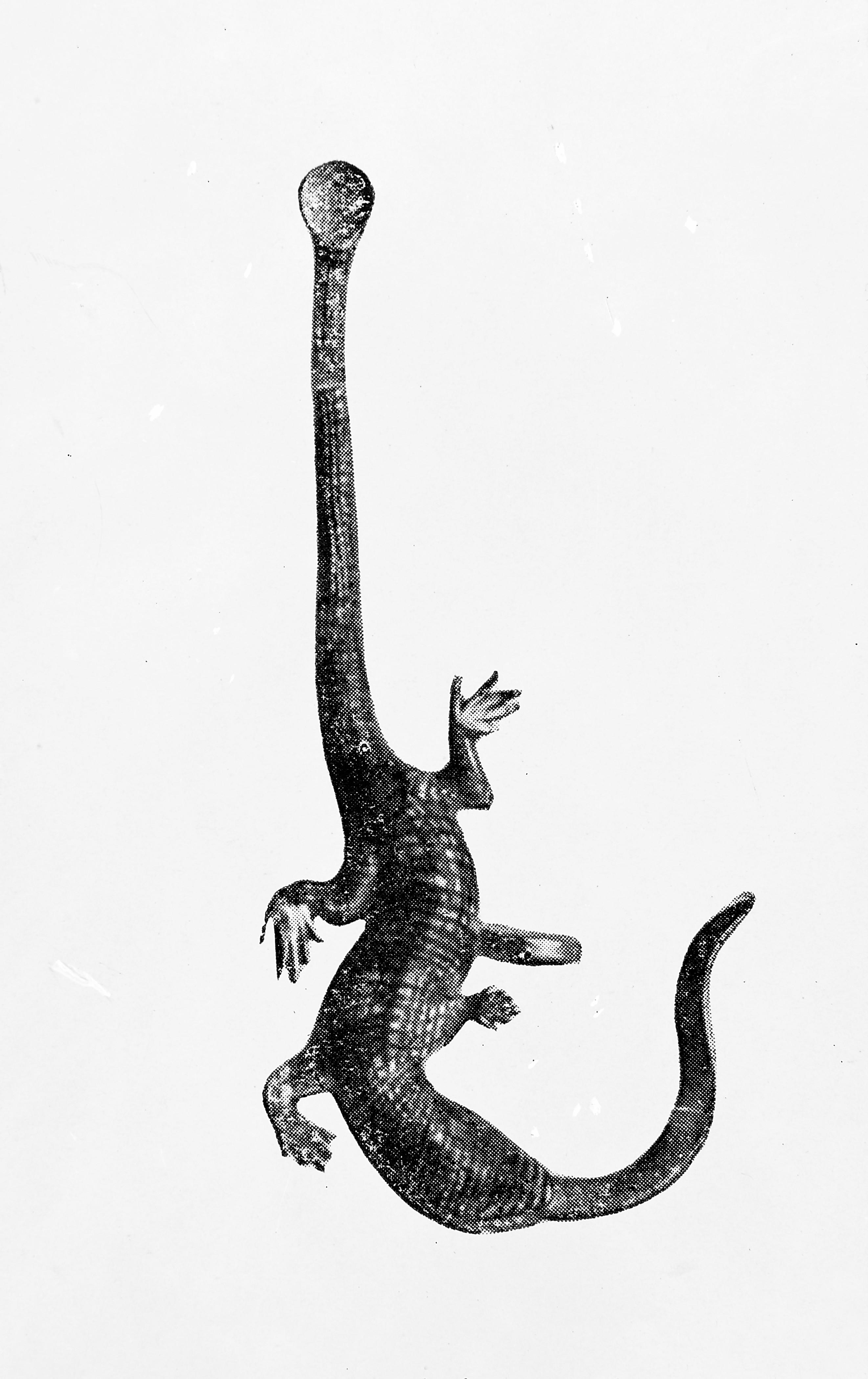 not a lizard