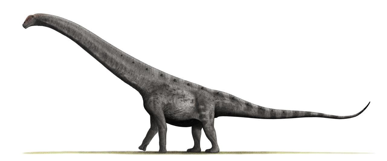 Argentinosaurus — Wikipédia