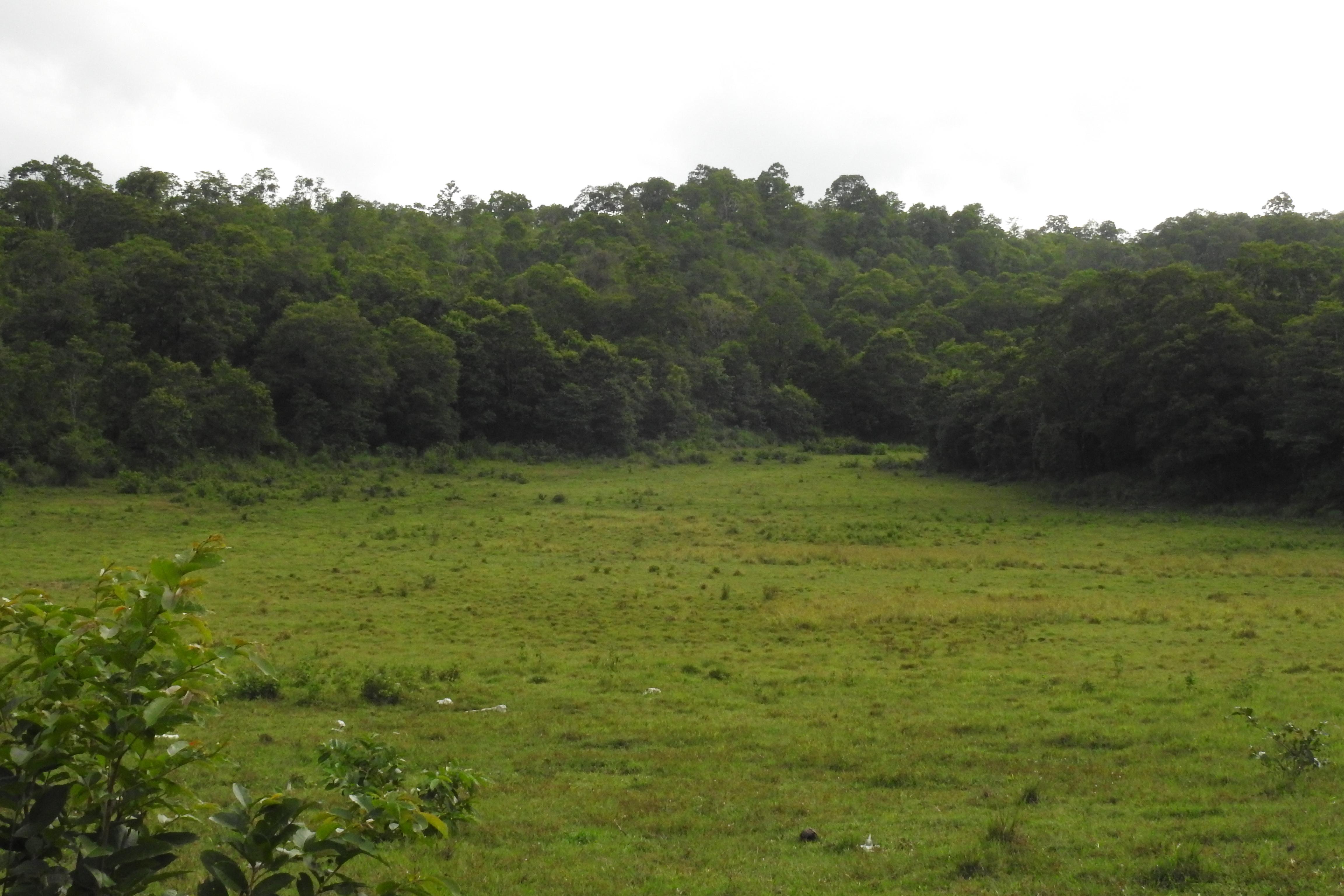 "Larisa koshkina has released this ""dense forest"" image under public domain license. File Grassland In Dense Forest Jpg Wikimedia Commons"