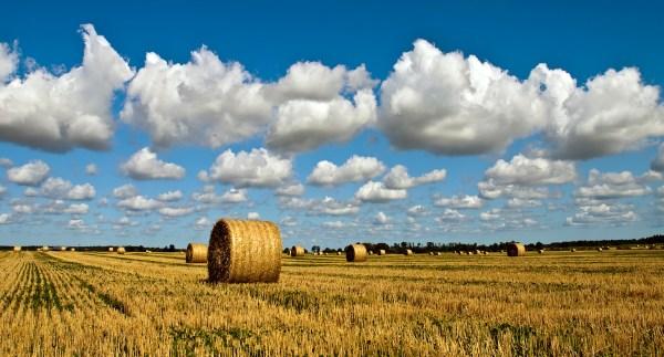 file farm gotland sweden