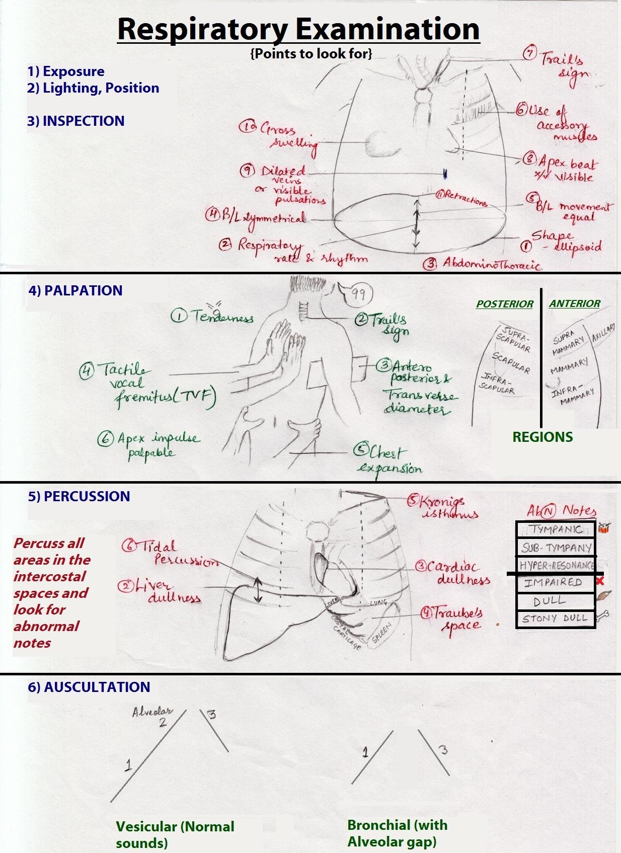 Respiratory Examination