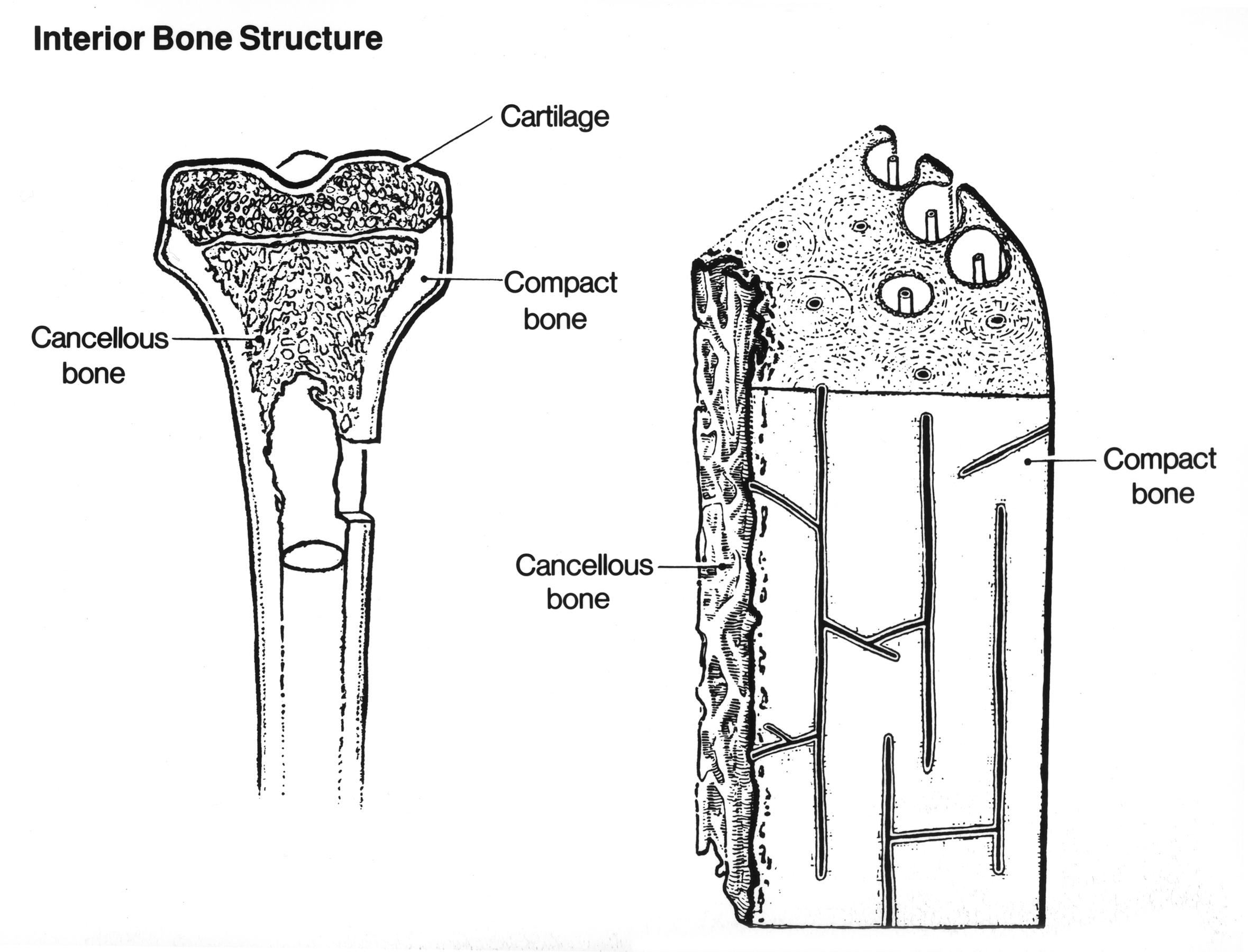 File Anatomy Bone