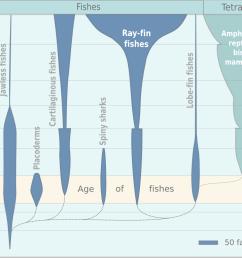 file fish evolution png [ 1073 x 767 Pixel ]
