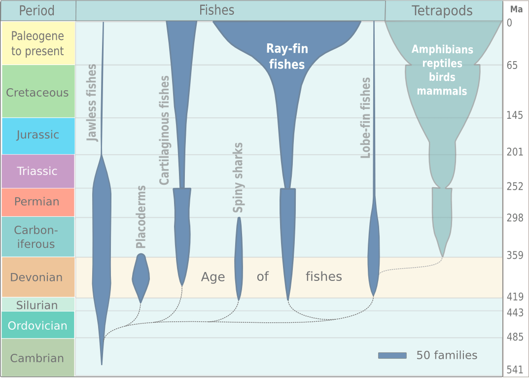 hight resolution of file fish evolution png