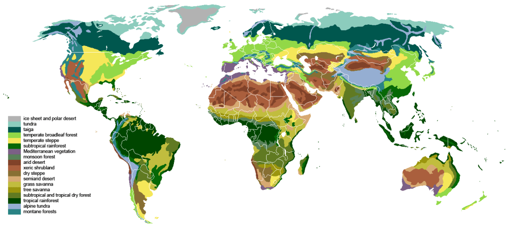 medium resolution of diagram of the temperate forest