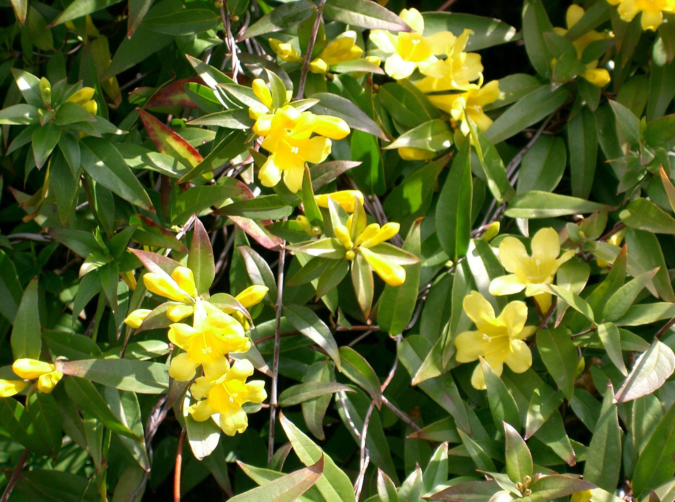 【要注意】 綺麗な花を咲かせるのに毒性のある植物たちまとめ - NAVER まとめ