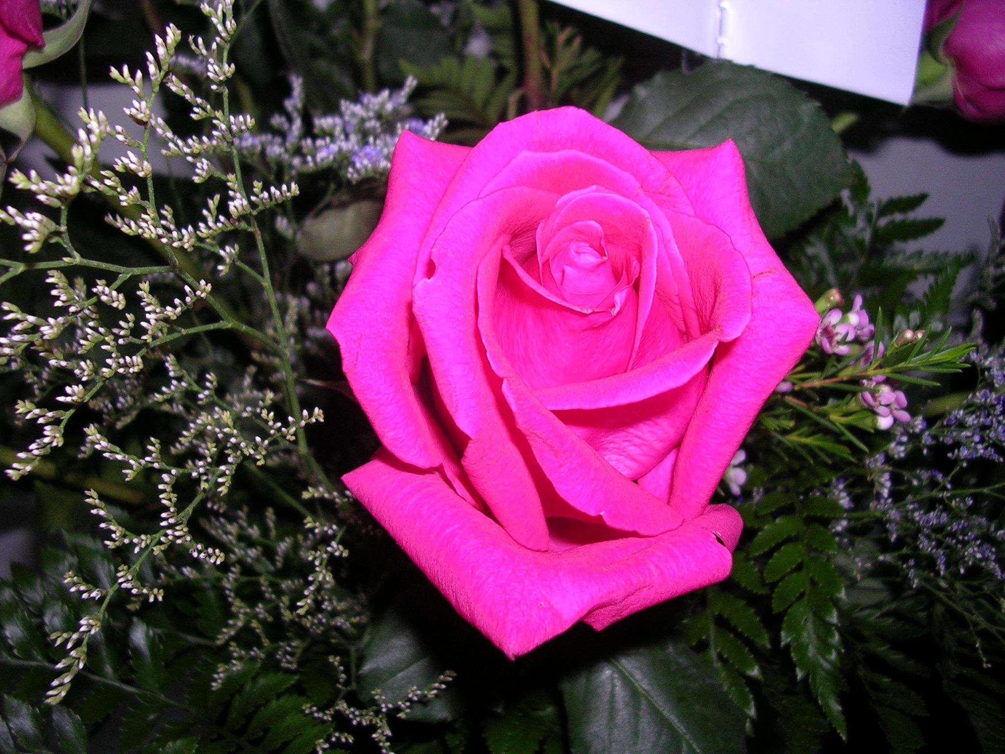 file pretty pink rose