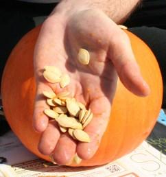 pumpkin seed [ 1000 x 901 Pixel ]