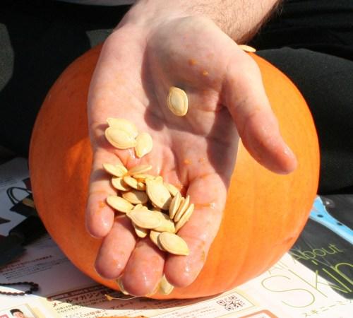 small resolution of pumpkin seed